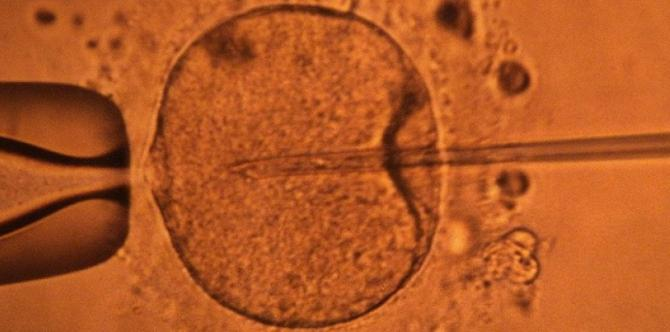Fertilisation in vitro d'un ovule AFP